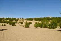 Les dunes de Tadoussac