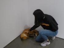 Un renard empaillé dans un coin d'une des pièces du musée