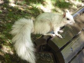 Un écureuil albinos... So cute !
