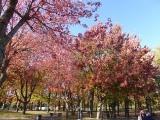 L'automne au Lac des Castors