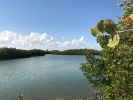 La mangrove de Key Biscane